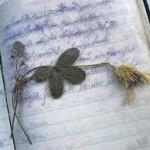 scrivere memorie